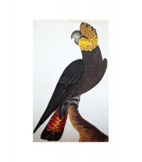 Oiseau_4
