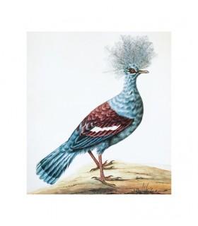 Oiseau_5