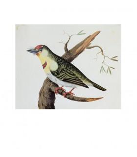 Oiseau_6